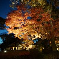 太田黒公園の紅葉 その5 (夜)