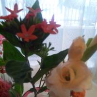 シャンソン歌手リリ・レイLILI LEY   花の気  声の気 シャンソンの味