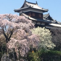 今年も桜と再会できました。