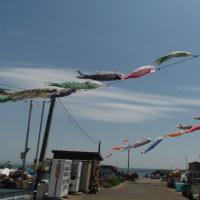風 薫る? 風強し!5月を迎えた三浦半島南部