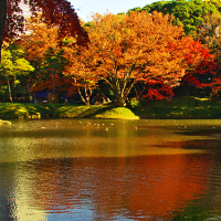 小石川後楽園の紅葉-2-