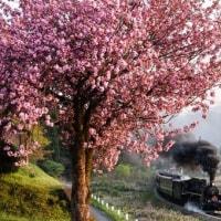 春の盤西 最終回
