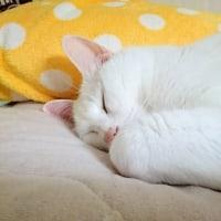 小さくニャって寝てるニャう。