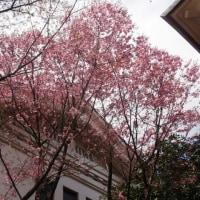 スポコミ・カワラ版 4月21日(金)先負