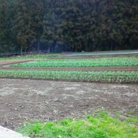 愛媛有機農業研究会、圃場見学