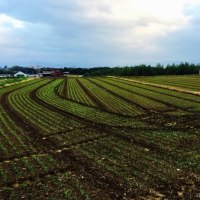 My field