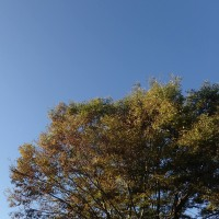 2016 全国一斉シェアリングネイチャーの日 in 満濃池森林公園