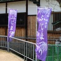 熊野街道信達宿の藤まつり