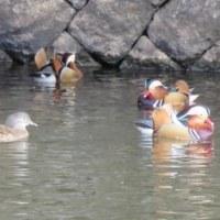 Gifu / Matsuo Pond ( 松尾池)