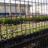 種花広場にも春が来た。