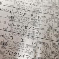 レッドゼノン 阪神2R 3歳未勝利 ダ1800m