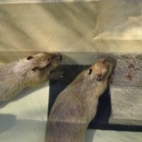 ☆お風呂三昧にメゴくんとユメちゃん〜智光山公園こども動物園〜