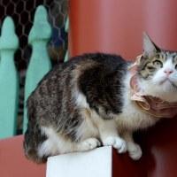 浅草雷門の猫ちゃん・・1