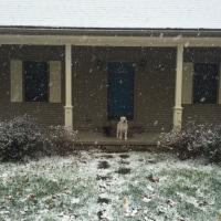 雪が積もった木曜日