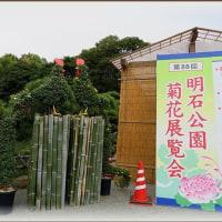 菊花展&農林漁業祭