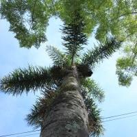 ポートユニオンの街路樹