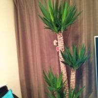 3月26日(日曜日)…大きな観葉植物他購入
