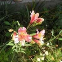 山椒の実の青 5月の香り