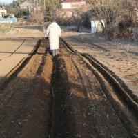 ●2/19 大久保農園報告 ジャガイモ畝のセティング