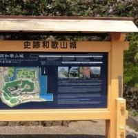 お花見in和歌山城