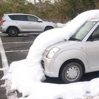 森の京都 駐車場で、雪将軍に襲われた車を発見