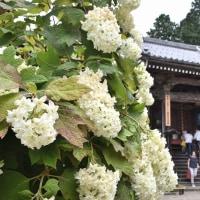 あじさい寺 (観音寺) 京都府福知山市 2017.06.25