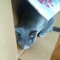 【小梅・さくら通信】箱の使い方は猫それぞれ...