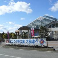 「世界の椿館・碁石」の椿・光源氏(ひかるげんじ) 2017年2月8日(水)