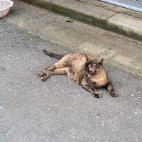 北千住の野良猫たちと生体販売問題のこと