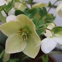 春を感じている花の香り