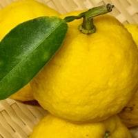 南国でも冬の味覚〜大根の柚子巻き