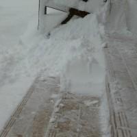 玄関が雪の絨毯になりました。