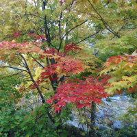 圧巻! 定山渓の紅葉