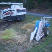ワラを取る為にバインダーで刈ってコンバインで即脱穀