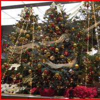 百万石のクリスマスツリー♪