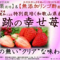 奥田さんの「奇跡の幸せ苺」入荷♪