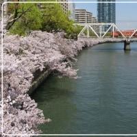 桜のシーズンもそろそろ終わり ですね