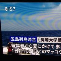 五島列島でクジラウォッチ?