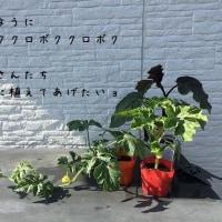 5.29庭の様子
