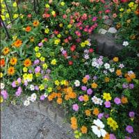 絵本の中の花畑<今日の庭7/26>