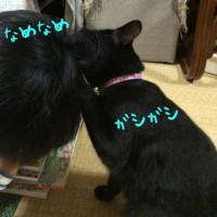 黒猫の仲間入り