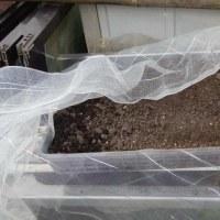 ナメクジ捕りと黒大豆の緑化栽培