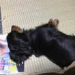 雑誌を枕にするの図(笑