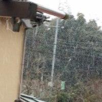 降ってきちゃったよー雪