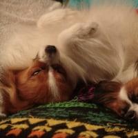 私の愛犬・・・愛しのリム嬢との悩み