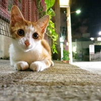 暑い沖縄の夜と猫たち 2016年6月 その4