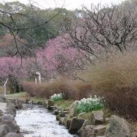 万博記念公園「梅まつり」の前に・・・!