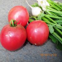 ズボラ 今日の収穫新鮮野菜勿論無農薬無手入れ