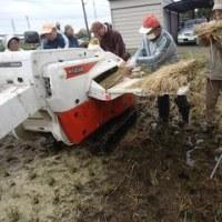 EMによるもち米作り(Blog430)