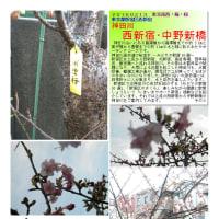 散策 「東京北東部-322」 西新宿・中野新橋 神田川